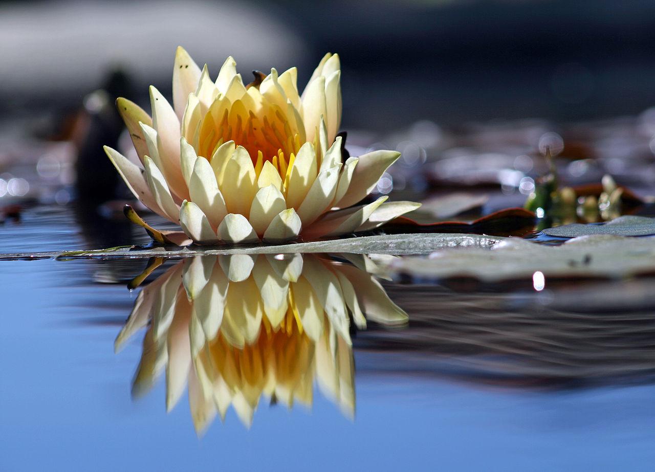 Mindfulness en Meditatie